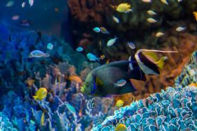 вода, кораллы, рыбки