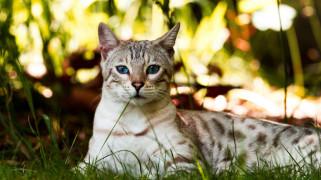 животные, коты, кот, трава, кошка