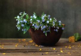 цветы, натюрморт