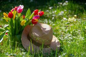 трава, тюльпаны, шляпа