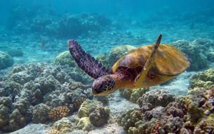 черепаха, животные