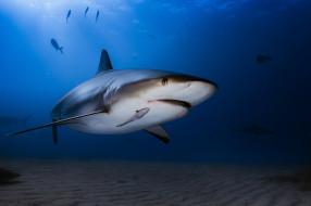 животные, акулы, океан, вода, акула