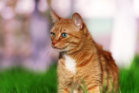 животные, коты, кошка, травка, зелень, кот
