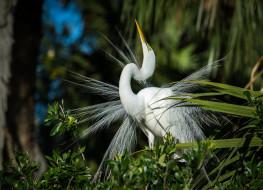 животные, цапли,  выпи, цапля, птица, перья, белая