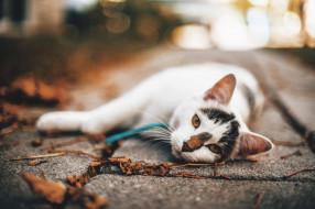 животные, коты, кот, кошка, листья, осень