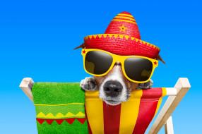 юмор и приколы, шезлонг, джек-рассел, пес, собака, полотенце, очки, шляпа
