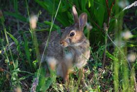 трава, заяц, серый