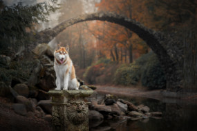 собака, взгляд, лес