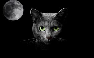 животные, коты, ночь, кошка, луна, фантазия