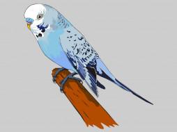 векторная графика, животные , animals, фон, попугаи