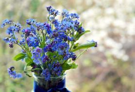 обои для рабочего стола 2560x1754 цветы, незабудки, голубой