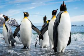 пляж, море, пингвины, стая