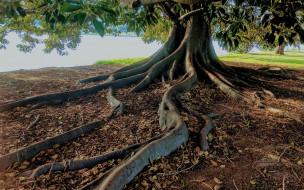 Ствол, Природа, Листья, Корни, Дерево
