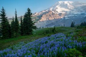горы, лес, Голубые цветы