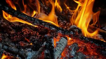 пламя, костер, шишки