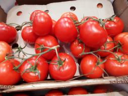 помидоры, томаты, еда