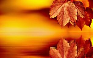 Фон, отражение, лист