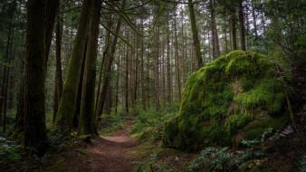 Лес, камень