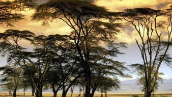 небо, деревья