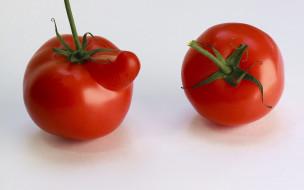 помидор, фон