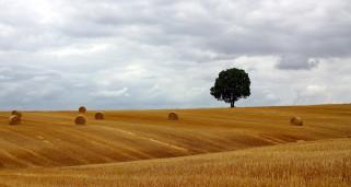 поле, стога, дерево