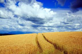 природа, поля, тропинка, поле, облака