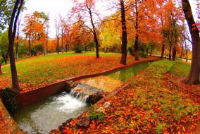 листопад, ручей, осень