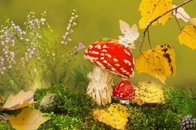 мухоморы, клоп, листья, мох, Vlad Vladilenoff, природа, шишки, грибы, осень, трава, макро, ветка