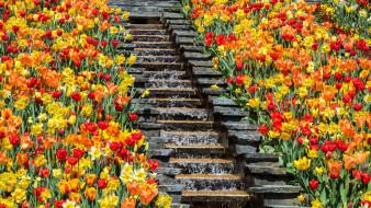 цветы, разные вместе, германия, парк, клумба, тюльпаны, водопад, ступеньки