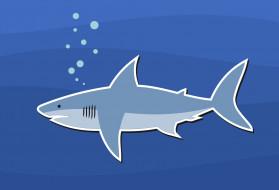 обои для рабочего стола 1920x1309 векторная графика, животные , animals, акула