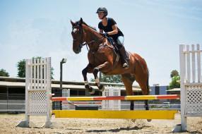 лошадь, прыжок