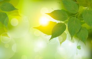зеленый, свет, листья, береза