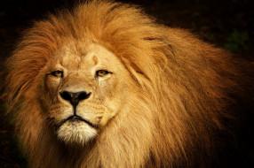царь, зверь, лев