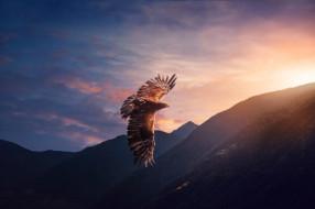 птица, полет, хищник, небо, орел