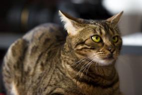 кошка, животные, коты