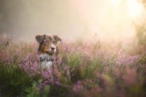 животные, собаки, трава, луг, туман, цветы, пес, собака
