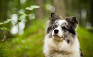 животные, собаки, собака, зелень, взгляд