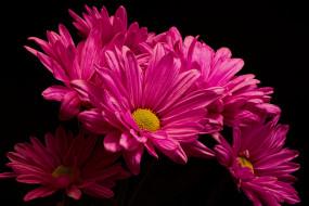 цветы, природа, фон