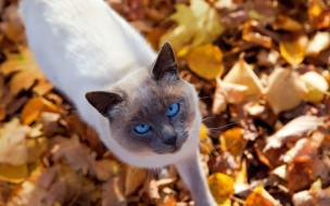 котик, природа, кот, листья, осень, животное, взгляд