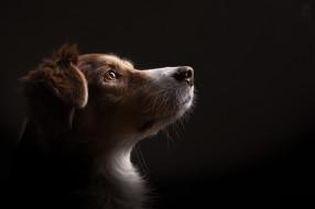 дом, взгляд, собака, фон