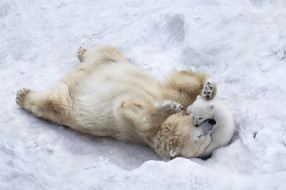 puppy, winter, fur, animals, wildlife, son, mother, playing, ice, nature, paws, snow, Polar bears, wild