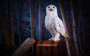 магия, полярная, сова, лес, Хогвардс, сундук, обработка, чемодан, книга, птица, тема, белая, взгляд, коллаж, деревья