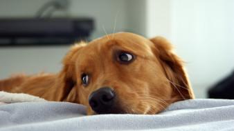 Животные, собака
