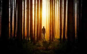 человек, тень, силуэт, лес