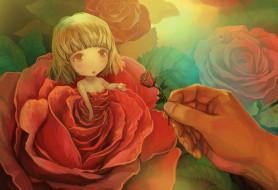 девочка, роза, фон, цветок