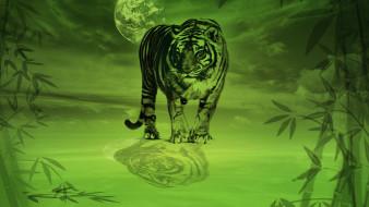 тигр, луна, бамбук
