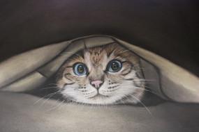 рисованное, животные, взгляд, фон, кот