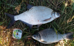 разное, рыбалка,  рыбаки,  улов,  снасти, карась, лещ