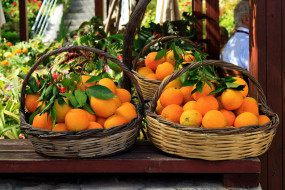 еда, цитрусы, апельсины