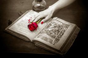 лампа, книга, роза